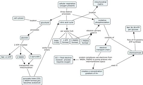 how photosynthesis yields sugar concept map cellular respiration concept map