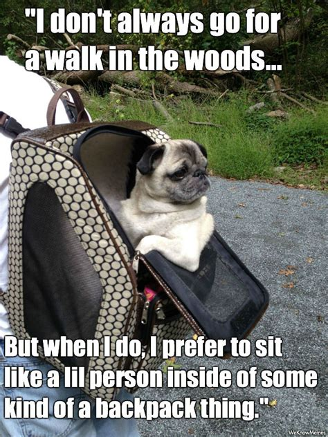 pug in the world the most interesting pug in the world weknowmemes