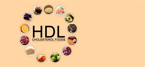 healthy fats to raise hdl 25 hdl cholesterol foods to include in your diet hdl