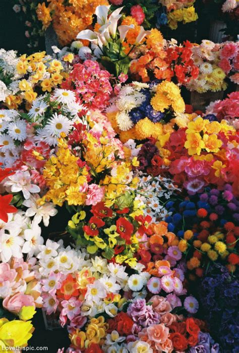 beautiful garden of flowers beautiful garden of flowers pictures photos and images