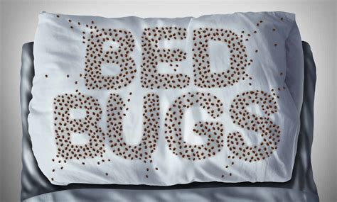 how to know if bed bugs are gone how to tell if the bed bugs are really gone or not