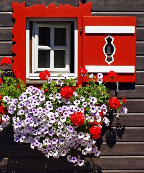 fioriere per davanzale finestra janela windows fioriere per davanzale finestra e