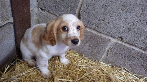 puppy farms all you need to about buying puppies and how to avoid puppy farms metro news