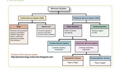 flow diagram of nervous system motor division of the nervous system impremedia net