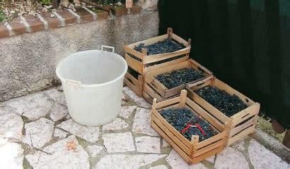 fare il vino in casa vino fatto in casa come ottenere pochi litri vita in