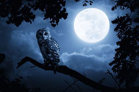 Hp Zu Bulan eule ihre bedeutung in der mythologie schamanen illuminaten und t 228 towierten seefahrern giga