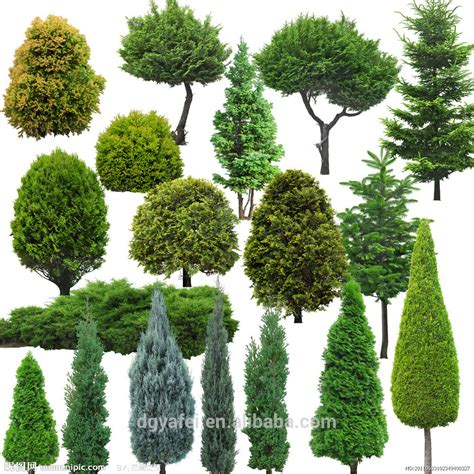 type of tree different types of plants and trees outdoor artificial