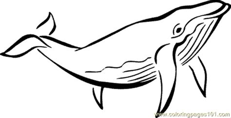 ocean animal coloring page 03 coloring page free whale