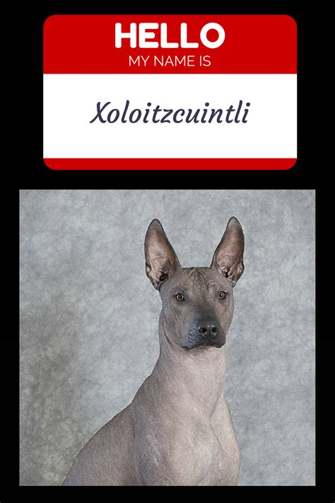 most hypoallergenic dogs what is the most hypoallergenic vills