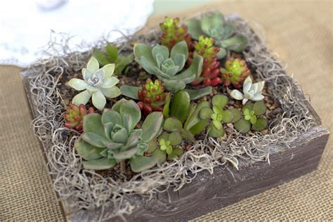 centerpieces with succulents a succulent wedding needles leaves