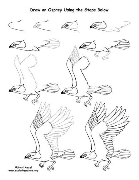 how to draw osprey
