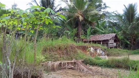 panorama alam  sebuah pedesaan  indonesia  cukup