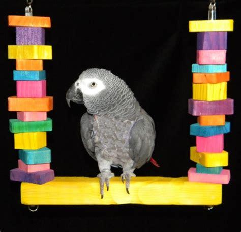 macaw swing lumberjack bird swing for african grey parrots