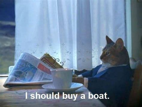 Cat Meme Boat - i should buy a boat cat know your meme