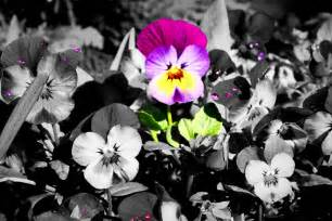 are you the color in this world your choice