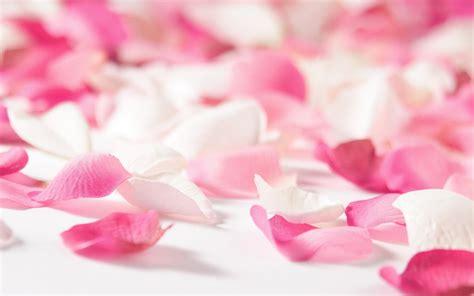 wallpaper flower petal flower petal wallpaper 1920x1200 4887