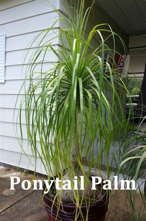 succulent plants    find  home