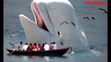 imagenes reales de ballenas ballena azul la ballena mas grande del mundo ballenas