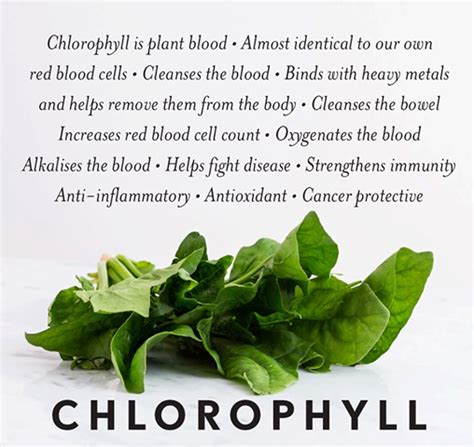 Chlorophyll Detox Benefits by Health Benefits Of Liquid Chlorophyll Lytnyc Colonic Center