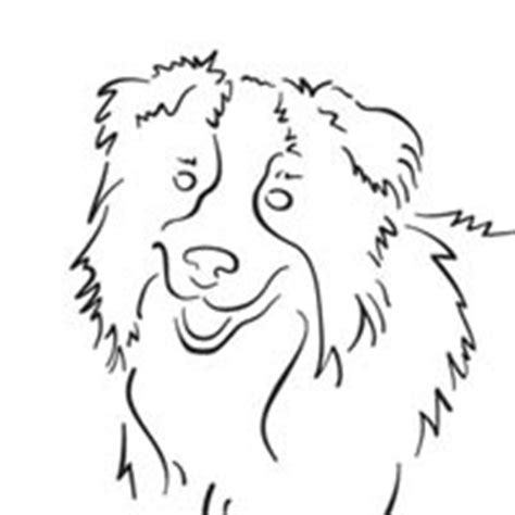 coloring page border collie border collie 187 coloring pages 187 surfnetkids