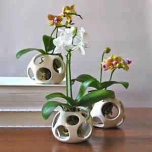 best 20 orchid pot ideas on