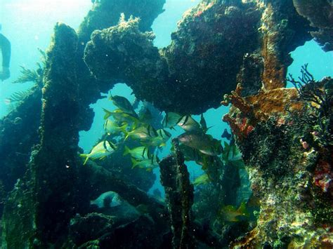 dive destinations 3 popular dive destinations in the gulf of mexico