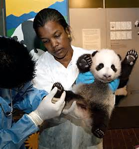 Requirements To Be A Zoologist by The Road To Become A Veterinarian Looking To Become A Veterinarian This Is A Great Place To