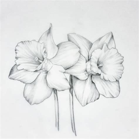 daffodil flower tattoo designs 125 best flowers drawing of daffodil images on