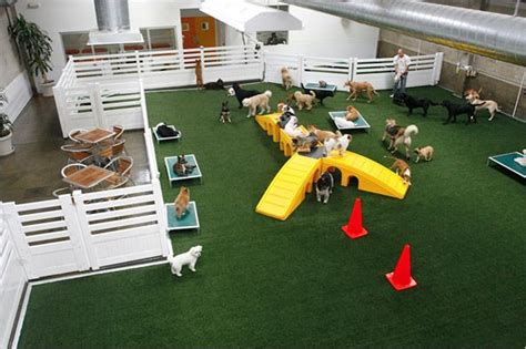day care for puppies modern hotels for dogs impress with luxurious interior design ideas play equipment
