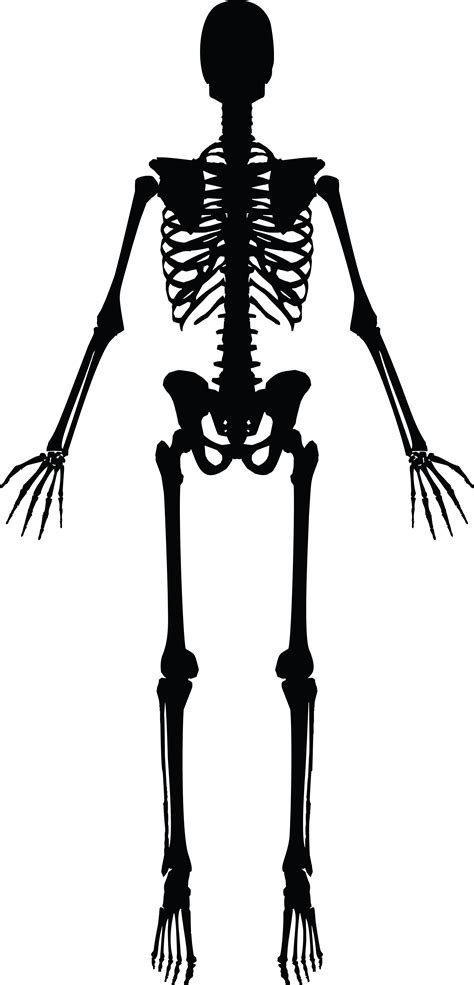 skeleton clipart free clipart of a human skeleton black and white