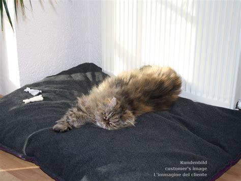 cuscino gatto cuscino per gatti con interno lattice pregiato