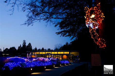Wildlights Kicks Off At Woodland Park Zoo Tonight My Ballard Zoo Lights Woodland Park