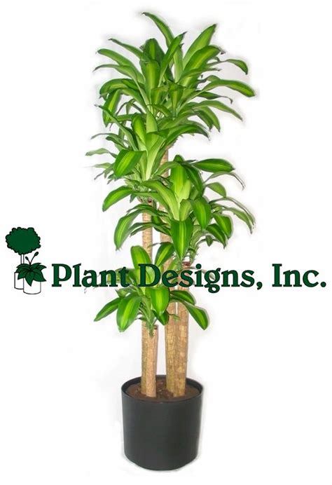 selection  indoor plants  indoor grow light plant