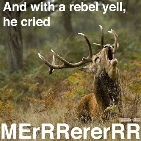 Moose Meme - 19 awesomely funny animal pictures for your morning kill
