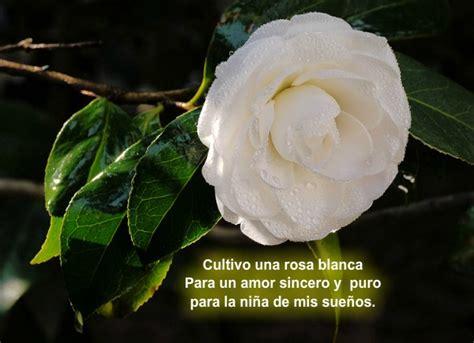 imagenes de rosas blancas para portada de facebook im 225 genes de rosas blancas con poemas imagenes de amor gratis
