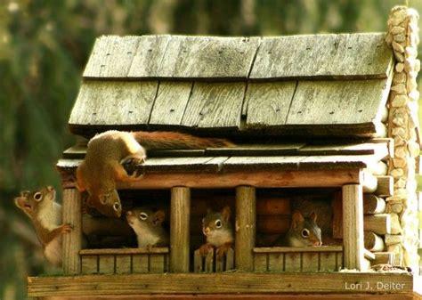 squirrel house squirrel house squirrels pinterest