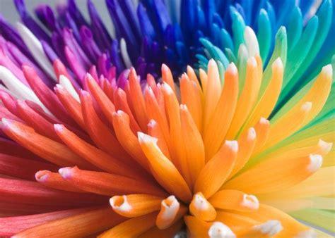 fiori dall olanda dall olanda i fiori arcobaleno galleria repubblica it