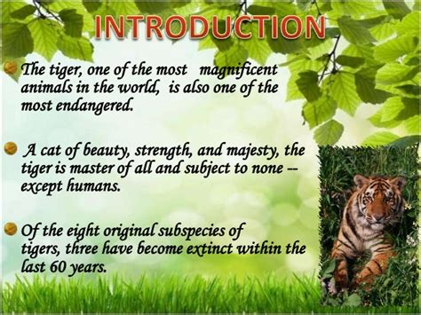 Save Tiger Essay In by Essay On Save Animals In Voice For Animals High