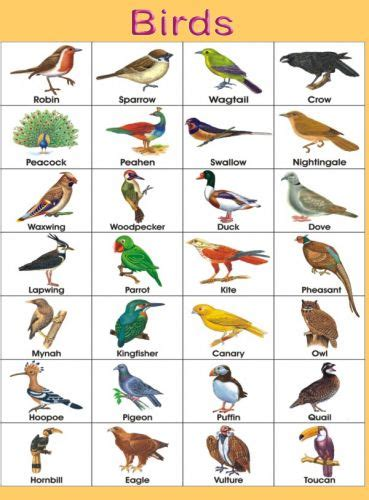 Names And Pictures Names And Pictures Of Birds Speciesworld