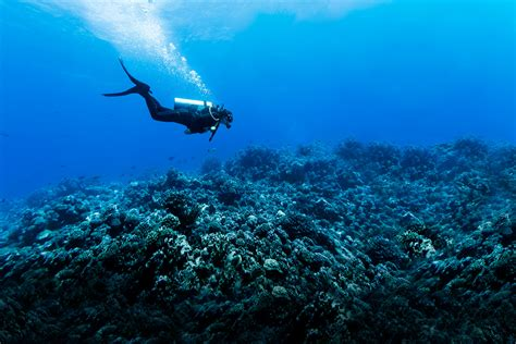 scuba diving scuba diving 101 how to explore a new world columbia