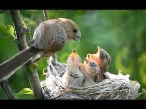 bird nest with babies www pixshark com images