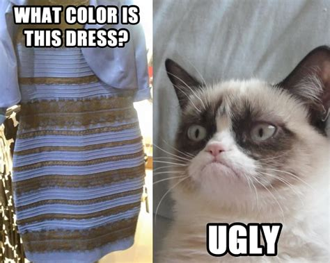 Ugly Cat Meme - the dress xanderated