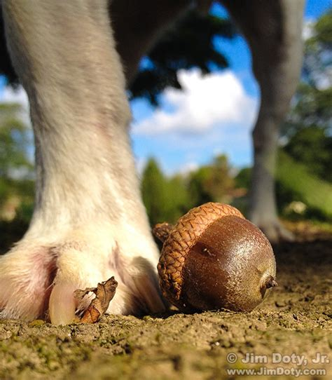 dogs acorns create great yard and garden photos with a phone jimdoty