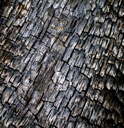Charred Wood Wallpaper