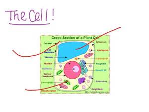 Galerry animal coloring cell worksheet