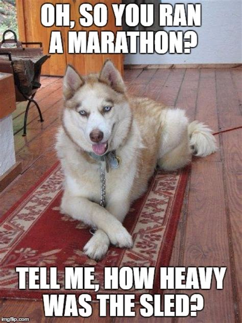 Funny Husky Meme - siberian husky meme related keywords suggestions