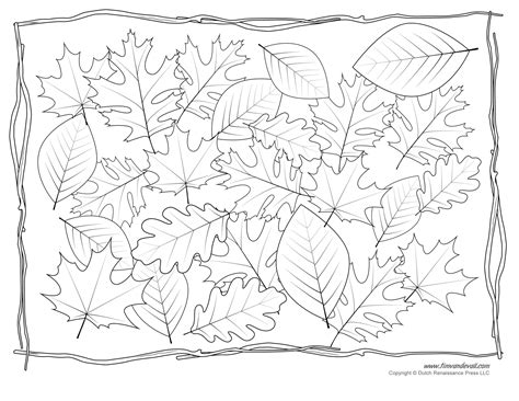 leaves coloring pages colored leaf templates leaf coloring pages for kids leaf
