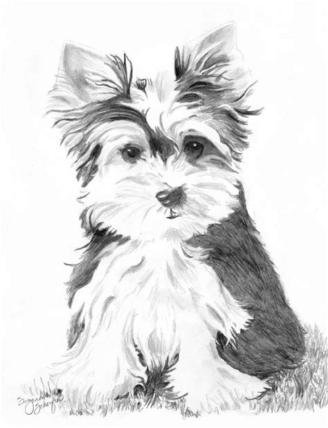 coloring pages yorkie moe yorkshire terrier drawing diy and crafts pinterest