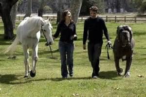 White horse vs neapolitan mastiff picture