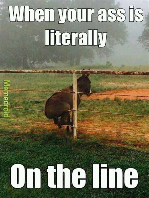 Donkey Meme - the best farm memes memedroid